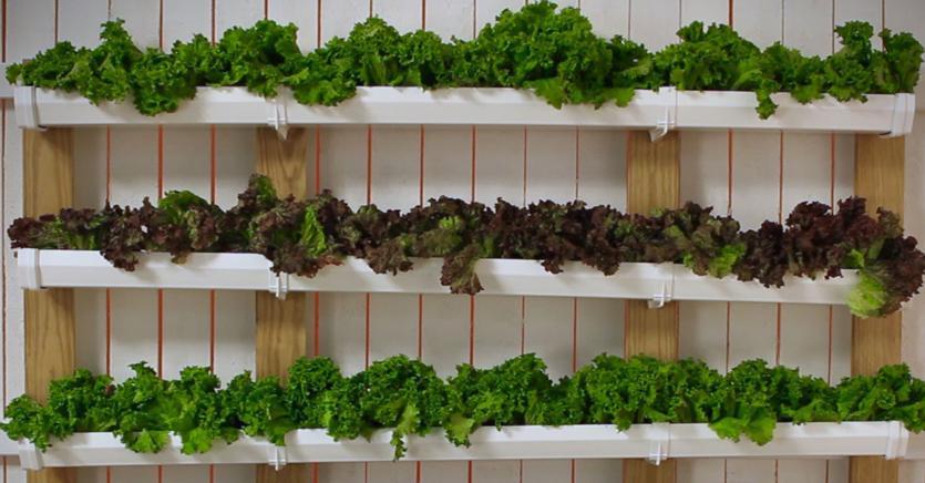 Il 62% degli italiani ha un orto in casa: ecco quanto costa farsene uno