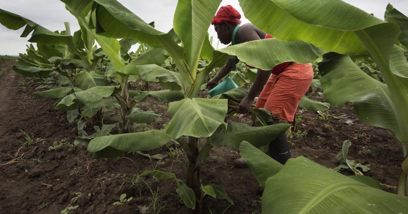 Formazione italiana    per le filiere agricole di cinque Paesi africani