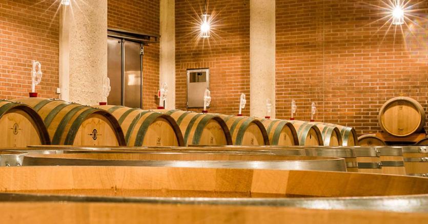 La viticoltura eroica di Hofstätter, tra i masi dell'Alto Adige e del Trentino