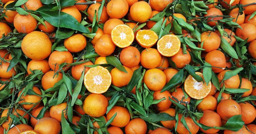 Allarme macchia nera sulle arance tunisine: l'Italia a rischio contagio