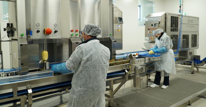 Frutta fresca pronta al consumo: Orsero punta sulla Sardegna