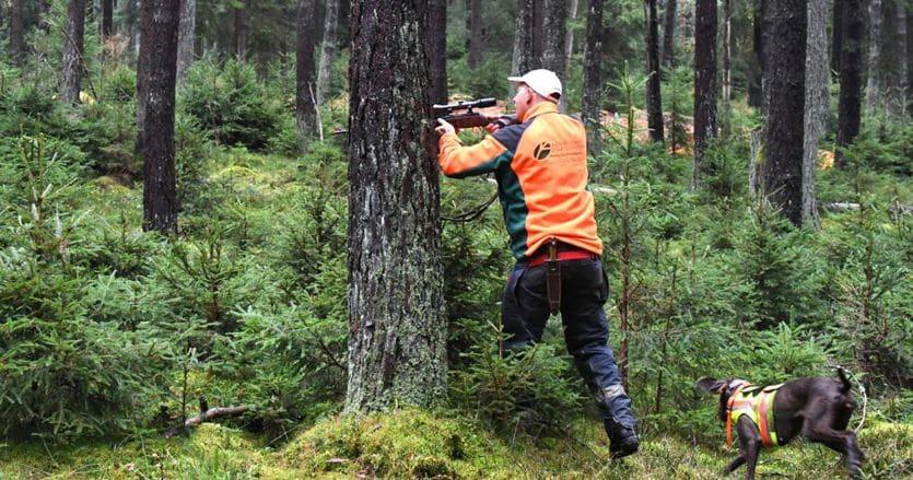 Reato e non illecito per il cacciatore che spara a ridosso delle abitazioni