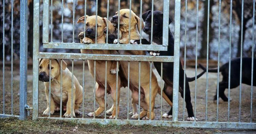 Riciclaggio per il veterinario che cambia il microchip dei cani