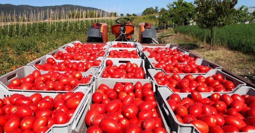 Alimentare, su 100 euro di spesa delle famiglie solo 5,1 vanno all'agroalimentare