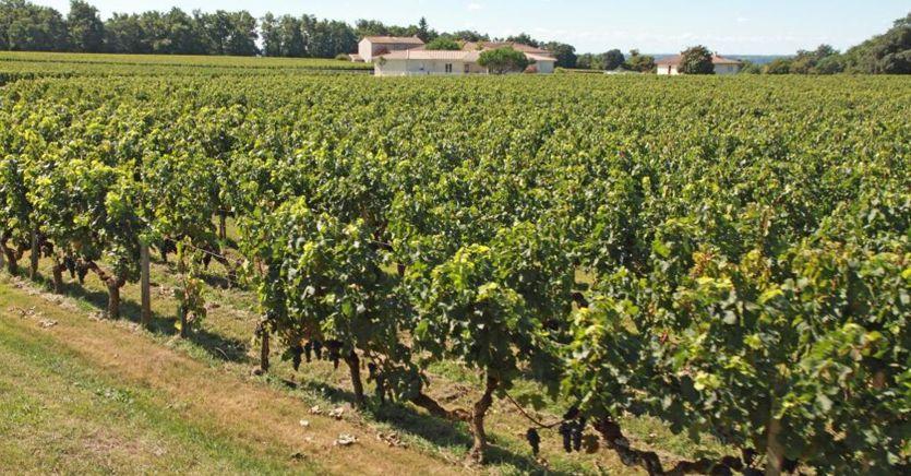 Un Bordeaux è il miglior vino del mondo del 2019. Terzo un Chianti classico