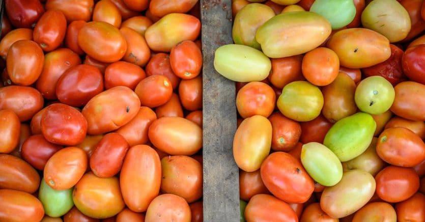Goodland lancia i pomodori pelati senza la piaga del caporalato
