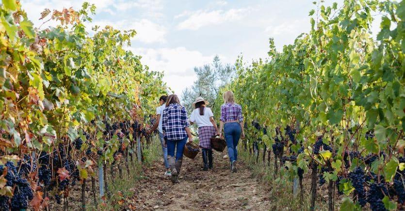 Braccianti agricoli, la filiera etica assume 50 giovani donne