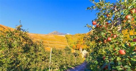 Maxipolo delle mele in Trentino: alleanza tra Melinda e La Trentina