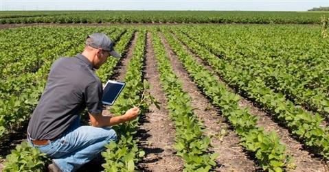 Al via la quarta asta delle terre agricole: l'Italia mette in vendita 16mila ettari