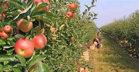 L'agricoltura resiste e nell'ultimo biennio perde solo l'1% della produzione