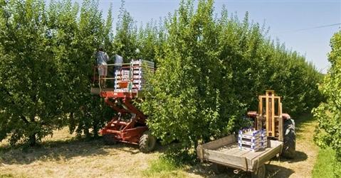 L'agricoltura crea sulla via Emilia 10mila nuovi posti di lavoro
