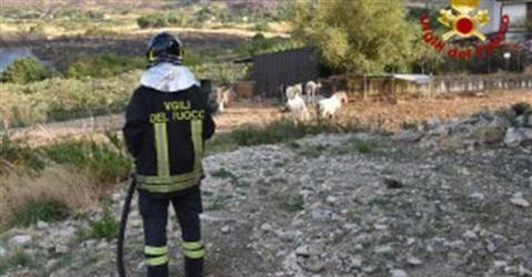 Incendi, gli agricoltori colpiti chiedono i ristori al governo
