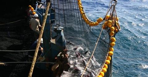 La crisi accelera la transizione della pesca italiana