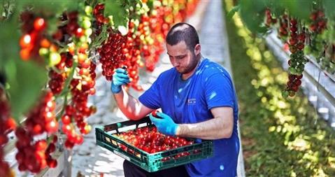 Stagionali agricoli, accordo con la Romania