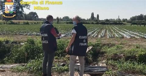 Sequestrata Cascina Pirola di Cassina de Pecchi (straBerry), le fragole milanesi a chilometro zero: l'accusa è caporalato