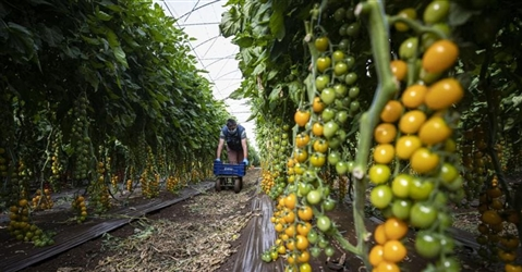 Agricoltura, Toscana prima per le richieste di finanziamento con il fondo garanzia