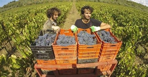 Fondi Ue per lo sviluppo rurale, le regioni italiane snobbano i giovani