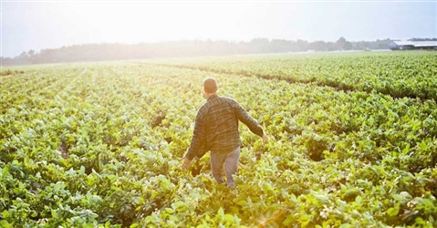 AGRIcoltura100 premia la sostenibilità italiana