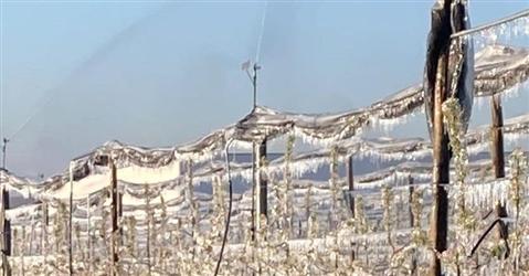 Il gelo danneggia il 75% della produzione agricola del Centro Nord