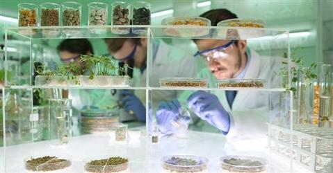 La Commissione Ue apre al biotech in agricoltura: non tutto è Ogm